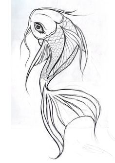 pencil coy fish long whiskers - Google Search