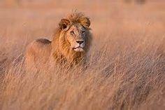 tall safari grass - Yahoo! Search