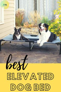Best Elevated Dog Bed 2020 listed here.You can check the Details all kind of pet products here. Dog Beds For Small Dogs, Cool Dog Beds, Large Dogs, Elevated Dog Bed, Pet Products, Ads, Amazon, Check, Big Dogs
