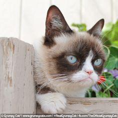 Grumpy Cat® - The world's grumpiest cat! - Part 2