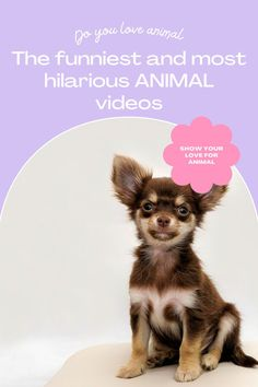 Top 10 Cutest funny animal — Small Cutest animal We Can't Get Enough Of Companion Dog Excellent. follow me for more! #dog #dogs #pet #doglover #doggy #puppy #puppies #puppys #dogoftheday #doglove #dogphotography #dogvideos #dogvideo dog, dogs, doglover Funny Animal Videos, Cute Funny Animals, Funny Dogs, Companion Dog, Try Not To Laugh, Cute Dogs And Puppies, Dog Photography, Cute Bunny, Super Funny