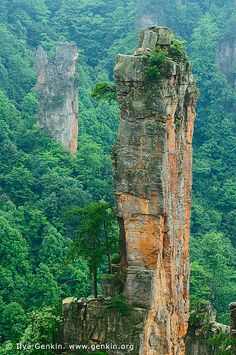 The Zhangjiajie National Forest Park is a unique national forest park in Zhangjiajie City in northern Hunan Province, #China. This is one of several national parks within the Wulingyuan Scenic Area...