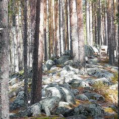 Kaunis harjupolku Kuikan kierroksella, Petkeljärvi, Ilomantsi, Pohjois-Karjala, 2015