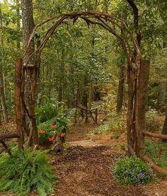 Back yard forest, tree house etc.