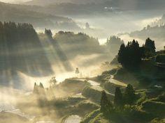 棚田 Terraced rice fields