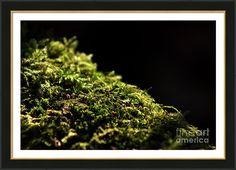 Svetlanistaya Framed Print featuring the photograph Abstract Green by Svetlana Svetlanistaya  #Svetlanistaya #Moss #Nature #Green #FramedPrints #HomeDecor #InteriorDesign