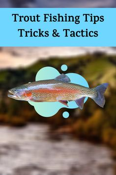 In this video I try to give you as many tips as I can think of to catch more trout and read the water. While I did not catch as many fish as I would have liked if you use these tips I guarantee you will catch more trout over all. Trout Fishing Tips, Best Fishing, Utah, River, Animals, Animales, Animaux, Animal, Animais