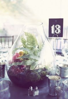 Alternatives to flowers? :  wedding Non Floral Teranium Wedding Centerpieces 01