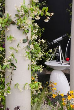 Fragrant climbing jasmine vine on pillar, with telescope of table for night sky viewing in garden Night Garden, Moon Garden, Jasmine Vine, Small Backyard Landscaping, Backyard Decks, Garden Stand, Climbing Vines, Colorful Plants, Vegetable Garden Design