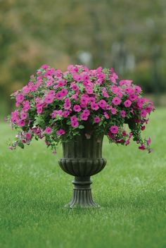I have this in the exact same container. Mine is with some Lantana, though. 2017 How to care for Wave Petunias Petunia Tattoo, Petunia Care, Petunia Plant, Container Plants, Container Gardening, Flower Gardening, Purple Petunias, Easy Waves, Urn Planters