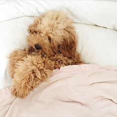 When you stay in bed all day  Cutest photo ever by @mrs_laurenmcmullen