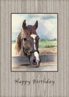 Birthday, Granddaughter, Brown Horse with Bridle card. Personalize any greeting card for no additional cost! Cards are shipped the Next Business Day. Brown And White Horse, Brown Horse, White Horses, 21st Birthday Cards, Happy 21st Birthday, Birthday Greeting Cards, Bday Cards, Birthday Quotes, Horse Cards