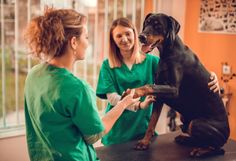 There are several things you might not know about veterinary technicians.
