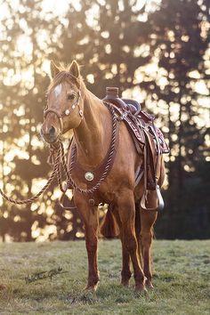 Birthday Horse by on by echkbet - Horse - Cute Horses, Pretty Horses, Horse Love, Beautiful Horses, Andalusian Horse, Friesian Horse, Breyer Horses, Draft Horses, Arabian Horses