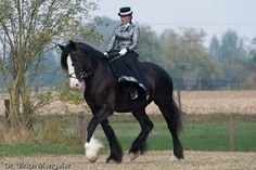 shire horses-riding aside