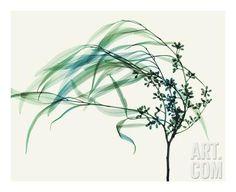 Wind Giclee Print by Steven N. Meyers at Art.com