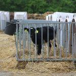 Tag der Milch und Millionen Kühe leiden
