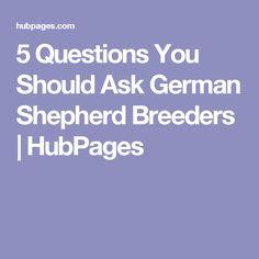 5 Questions You Should Ask German Shepherd Breeders   HubPages