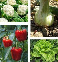 Huerto casero: Qué plantar en casa - Diferentes ideas de productos para cultivar en casa