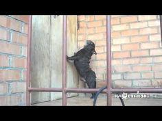 funny dogs talking: Open the door