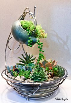 Another succulent garden that I made today.