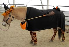 Horse Witch Costume