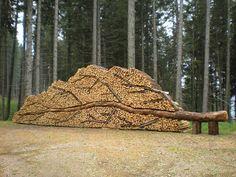 Binnenkant : Gekapte boom prachtig gestapeld!