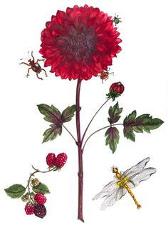 Dahlia watercolor fr
