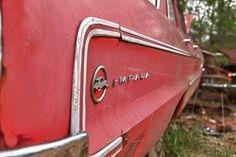 Impala, via Flickr.