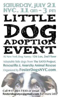 Foster Dogs NYC: Little Dog Adoption Event - July 21 2012 - Manhattan -- be there! With @Rescuzilla Animal Rescue of NYC Animal Rescue of NYC Animal Rescue of NYC