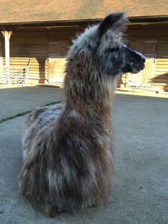 Image result for woolly llama Llamas, Animals, Image, Animaux, Animal, Animales, Animais