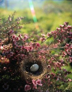 Little bird nest hidden among flowers