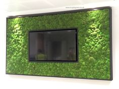 Around the fireplace?   Preserved Bun Moss Wall Panel with a cut out section to fit around a Television