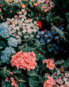 @HouseOfKlunkar posted to Instagram: #\\\\\\\\\# #\\\# #\\\# #\\\\# #\\\\\\#.  #houseofklunkar #designconglomerat #bettertogether #communitylove #kreativwirtschaft #gemeinsam #togetherstrong #growtogether #willkommenimwir #wi Pink Rose Flower, Pink Hydrangea, Hydrangeas, Blooming Flowers, Flower Images, Flower Pictures, Birds Of Paradise Flower, Illustration Blume, Flower Close Up