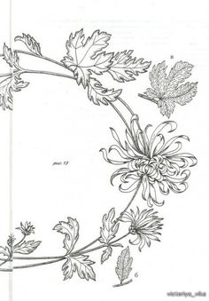 Gallery.ru / Фото #81 - книга по вышивке гладью+рисунки - Vladikana
