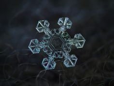 Snowflake macro photo: Ice crown, real snow crystal with massive broad arms and amazing central pattern, resembling coat of arms with big shield and two crossed spears