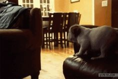 31 Biggest Dog Fails Of 2013