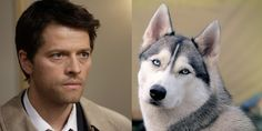 "The Cast Of ""Supernatural"" As Dogs. The fact that Cas is a Husky, and having owned huskies, I can totally say how perfect a fit this is. Just. Perfect."