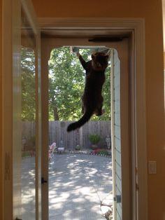 Pet Friendly Homes On Pinterest 332 Pins