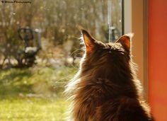 Kitty Reflection by Natassja Berg Hviid on 500px