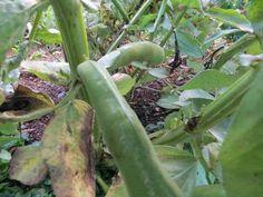 Inspirere deg til lagspill med naturen Organic Gardening, Vegetables, Vegetable Recipes, Organic Farming, Veggies