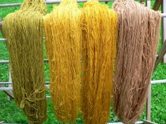 Localcolordyes did an interesting experiment with both alkaline and acidic marigold dye baths. These are the skeins on Sunday.