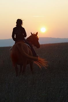 The most important role of equestrian clothing is for security Although horses can be trained they can be unforeseeable when provoked. Riders are susceptible while riding and handling horses, espec… Pretty Horses, Horse Love, Beautiful Horses, Beautiful Scenery, Country Life, Country Girls, Cavalo Wallpaper, Foto Cowgirl, Photos Bff