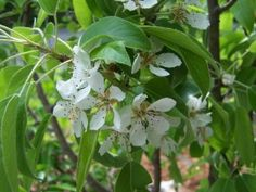 Adding fruit trees to your garden, even small ones.
