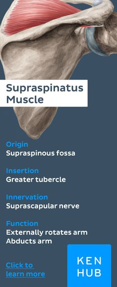 """Which #muscles belong to the rotator cuff?"" This one does! Pin to win #anatomy"