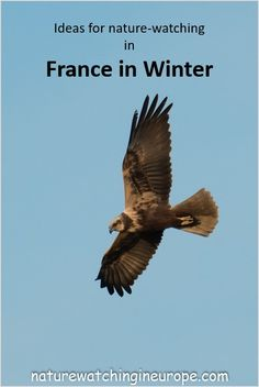 The naturalist in France in winter – Nature-watching in Europe Celtic Words, Blues Rock, Medieval Town, Travel Articles, Central Europe, France Travel, Mammals, Coast, Bottlenose Dolphin