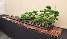 Wonderful Group Planting by Pierre Leloup. I LOVE the display!!!