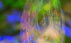 Spider Web - photo by jesptink