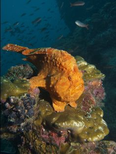 Frog fish stands still