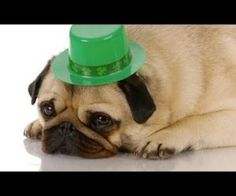 """Saint Patrick's Day Party Animals. It gives a new meaning to """"dog tired"""" !"""